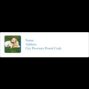 Animals Pet Care Design