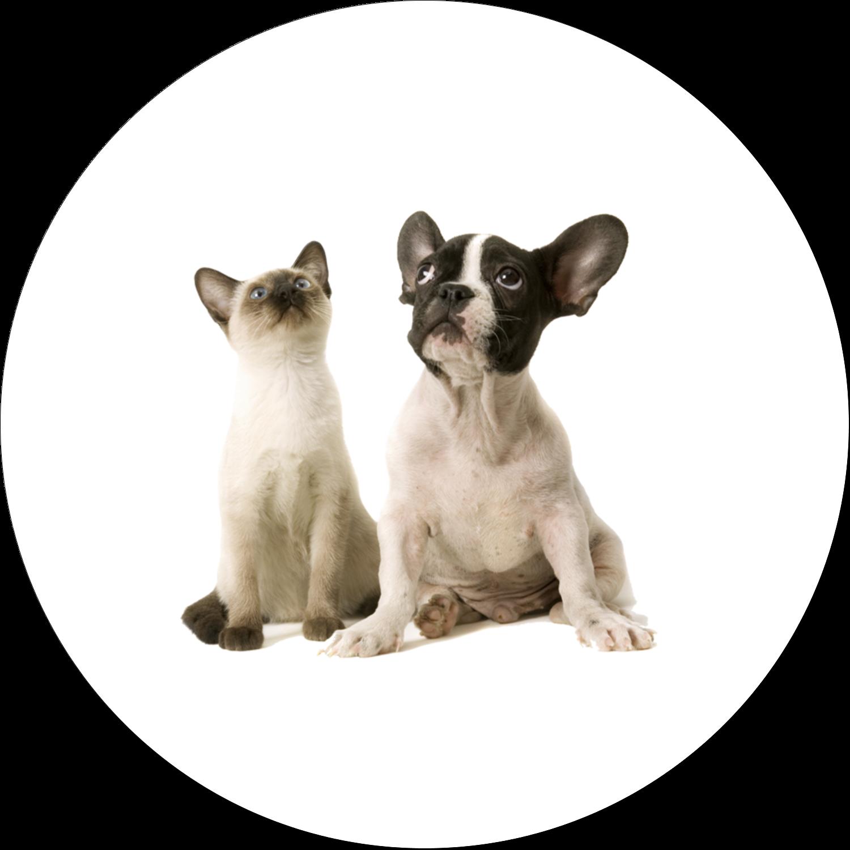 """1½"""" Diameter Étiquettes Voyantes - Adorables animaux de compagnie"""
