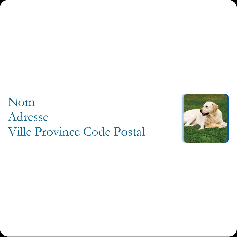 Soins aux animaux de compagnie Étiquettes D'Identification - gabarit prédéfini. <br/>Utilisez notre logiciel Avery Design & Print Online pour personnaliser facilement la conception.