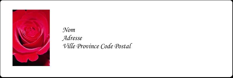 """1⅓"""" x 4"""" Étiquettes d'adresse - Rose rouge"""